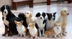 小池百合子愛犬総理