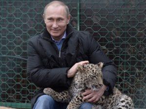 プーチンと虎