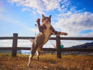 のら猫拳写真集写真家値段