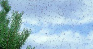 ウィンブルドン羽アリ原因影響